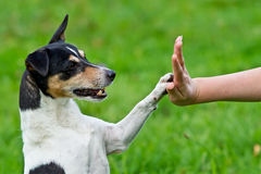 Give me five. Dog pressing his paw against a woman hand