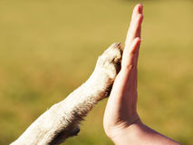 Give me five (2). Give me five, an animal paw and a human hand stock image