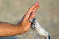 Give me five dog and man Stock Images