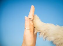 Give me five. Dog pressing his paw against a woman's hand - Give me five royalty free stock photography