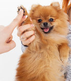 Give me five. Handshake between woman and dog stock photo