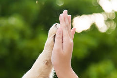 Give me five -Puppy pressing his paw against a Girl hand. On nature background stock images