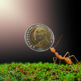Give money for ant Royalty Free Stock Photography