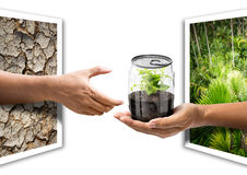 Give the plant in can. Hold out the hand from photo paper to give the plant internal transparency can in concept of natural conserve Royalty Free Stock Images
