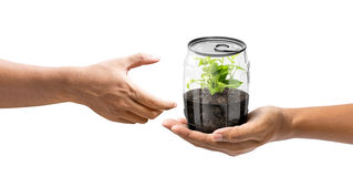 Give the plant in can Stock Photos