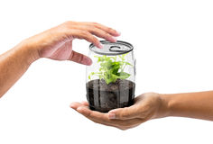 Give the plant in can. Hold out of hand to give the plant internal transparency can isolated on white in concept of natural conserve Stock Photography