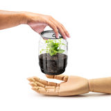 Give the plant in can. Hold out of hand to give the plant internal transparency can for wooden hand isolated on white in concept of natural conserve Stock Photography