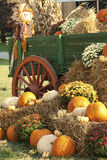 Give Thanks For The Earths Bounty. This is a display of a scarecrow, mums, and multicolored pumpkins at a local farmers market in Limestone County Alabama USA in stock images