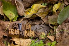 Give Thanks Spelled in Type Set. On a bed of dried leaves royalty free stock images