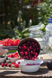 Give Washed cherry in a bowl Royalty Free Stock Image