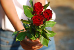 Giver. Blurred background of a young woman holding a red rose and send to someone in the evening sunshine Stock Photos