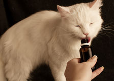 Giving cat medicine Stock Photography