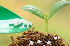 Giving chemical (Urea) fertilizer to young plant over green back Stock Photos