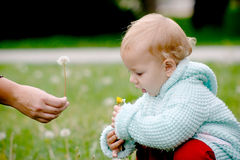 Giving a dandelion. Parent's arm giving a dandelion to his chld royalty free stock image