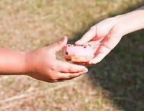 Giving a donut. Stock Photos