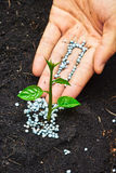 Giving fertilizer to a tree. A hand giving fertilizer to a young plant stock images