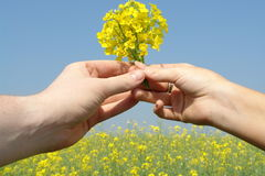 Giving flowers. Hand with flower as a present for someone against a clear blue sky background Royalty Free Stock Photography