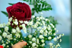 Giving flowers to a woman. Giving flowers to someone is considered the best gift ever, even if there are no special occasions to do Royalty Free Stock Photo