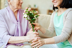 Giving fresh roses Royalty Free Stock Photos