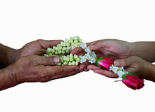 Giving jasmine garland. Hand to hand giving jasmine garland, flowers, isolated on white background. Thai traditional culture for a special occasion for paying Royalty Free Stock Photos