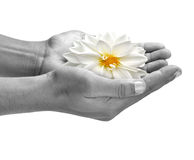 Giving life. Concept - open hands praying with flowers Royalty Free Stock Photography