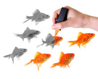 Giving Life To A Group Of Goldfish Stock Image