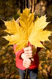 Giving maple leaf. Close-up of childish hand with dry maple leaf giving it to you Royalty Free Stock Photos