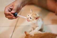 Giving milk to kitten cat via dropper. Because they are to young royalty free stock photography