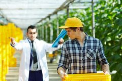 Giving Orders to Greenhouse Worker Royalty Free Stock Image