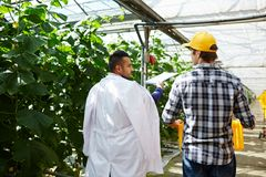 Giving Recommendations to Greenhouse Worker Royalty Free Stock Photography