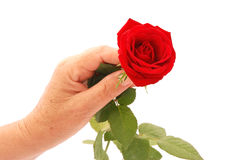 Giving red rose Stock Photo
