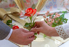 giving roses стоковое фото rf