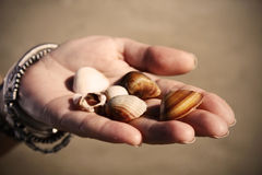 Giving seashells. Vintage image of seashells on a woman's palm brightly lit by sun (shallow DOF Royalty Free Stock Photography