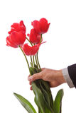 Giving Tulips. A man is handing tulips to his loved one isolated on a white background Stock Photo