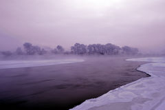 Givre d'hiver Photographie stock libre de droits