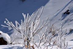 Givre de l'hiver images libres de droits