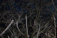 Givre dur, paysage gelé du pays des merveilles d'hiver d'arbre Fond de brouillard et de brume, brouillard de congélation humidité images libres de droits