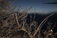 Givre dur, paysage gelé du pays des merveilles d'hiver d'arbre Fond de brouillard et de brume, brouillard de congélation humidité photos stock