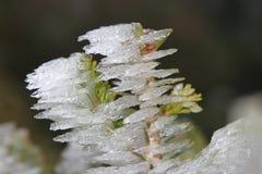 Givre en hiver Image stock