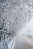 Givre le fleuve Songhua de brouillard dense de scène de neige Photographie stock
