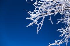 Givre, paysage de Œwinter de ¼ de Christmasï Photo stock
