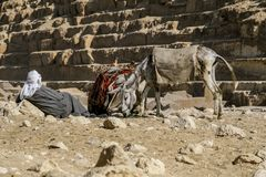 Tourist salesman with a donkey resting at the Cheops pyramid. GIZA, EGYPT - DECEMBER 2, 2006: Tourist salesman with a donkey resting at the Cheops pyramid royalty free stock images