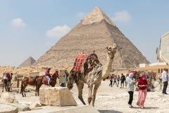 Giza, Egypte - April 19, 2019: De verfraaide Kameel wacht op een passagier voor de Piramide van Khafre, Egypte royalty-vrije stock foto's