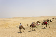 Giza - Händler und cammels Stockbild