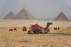 Giza Royalty Free Stock Photography