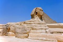 giza stor sphinx 2009 royaltyfri bild