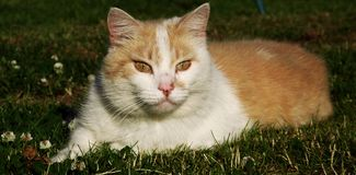 Cat. Domestic cat in the grass Stock Photo