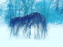 Gjekk verde di inverno dell'albero piccolo Immagine Stock