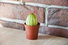 gjord easter äggbild grön livstid blommaillustrationen shoppar smellcomp DIY och handgjort Målat ägg lyckliga easter Naturlig fär arkivbild