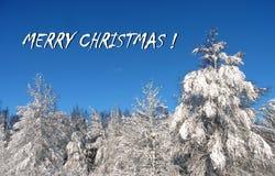 Gjord glad julkort genom att använda träd och vägen i vinter, Litauen royaltyfria bilder